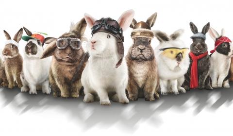 Osterhasen-Rasen Gruppenfoto